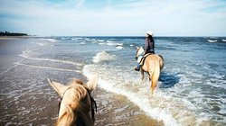Kelly Seahorse Ranch