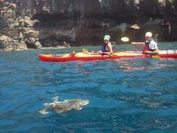 Εκδρομές Santorini Sea Kayak - Day Tours