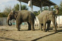 Kharkov Zoo
