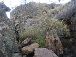 El arbusto que venció la roca con sus raíces