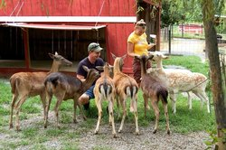 Smoky Mountain Deer Farm & Exotic Petting Zoo