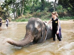 Chiang Mai Elephant Care - Day Tours