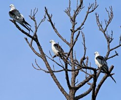 CREW Land & Water Trust - Bird Rookery Swamp Trails
