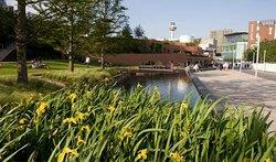 Chavasse Park