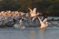 Everglades Area Tours