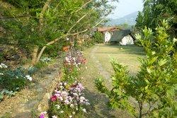 Jacaranda Estate & Whispering Willows Cottages