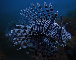 Mactan Island Aquarium