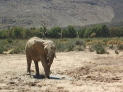 Aquila Private Game Reserve - Day Trip Safari
