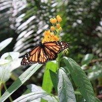 Curacao Butterfly garden bar & Restaurant