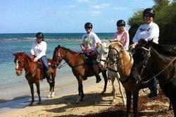Taxi Horses
