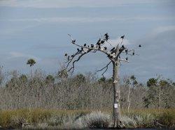 Lower Suwannee National Wildlife Refuge