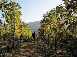 Dalamara Winery