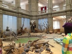 Zoologisches Museum König