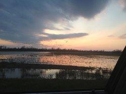 ducks on the fields