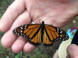 El Rosario Monarch Butterfly Preserve