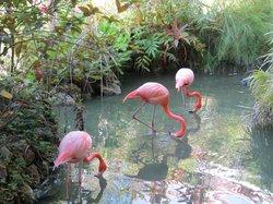 Cute flamingos.