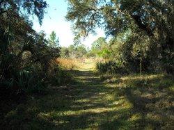 Crystal River Preserve State Park Eco-Walk