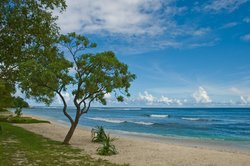 beach                  (60398823)