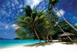 beach                  (60398832)