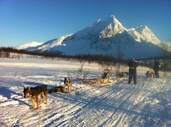 Dog Sledding Lyngen Alps Day Tour