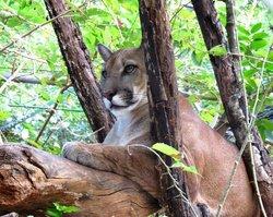 Centro de Rescate Las Pumas
