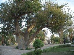 Feryal Garden