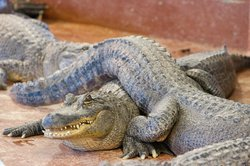 Arkansas Alligator Farm & Petting Zoo