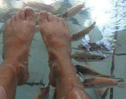 Tibiao Fish Spa