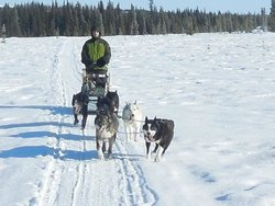 Dog Sledding Tours at EarthSong Lodge