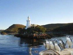 Bonnet Island Experience
