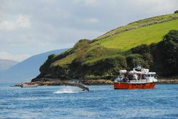 Dingle Dolphin Boat Tours