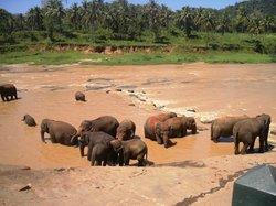 VTS Lanka Tours - Day Tours
