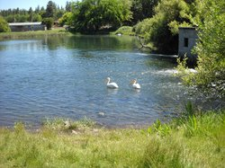 Sacramento River Trail
