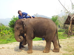 Chiangmai Elephant Training Day Tour