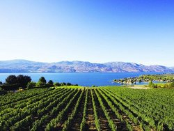 Vines & Views Wine Tours