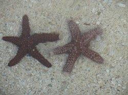 Lots of starfish on the beach