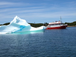 Twillingate Adventure Tours