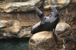 Max the Sea Lion points