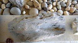 Akal Wood Fossil Park
