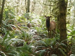 Ecola State Park lush forest