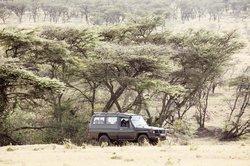 Mara Naboisho Conservancy