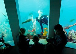 Southern Discoveries - Milford Discovery Centre and Underwater Observatory