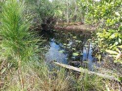Longleaf Pine Preserve