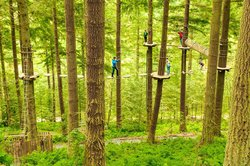 Go Ape Moors Valley