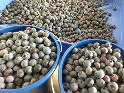 Berry Best Farm