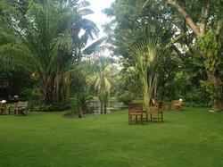oasis, the hotel garden