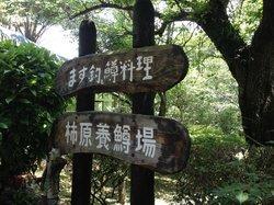 Ochozu no Mori