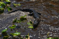 Airboat Wildlife Adventures