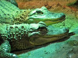 RAD Zoo (Reptile Amphibian Discovery Zoo)