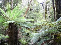 Oparara Kahurangi National Park Guided Tours
